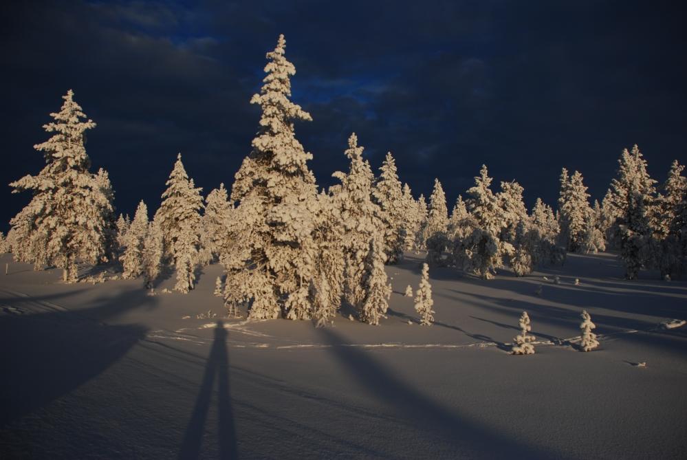 Arctic Magic (1/6)
