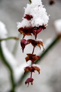 Winter Colours (Photo M. Germana)