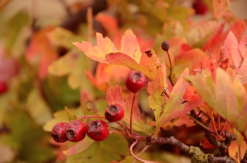 Autumnal Colours (Photo M. Germana)