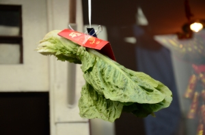 Hanging Lettuce (Photo M. Germana)